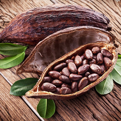 best cocoa in the world, coffee beans and cocoa beans, cocoa beans on trees, cocoa beans on trees, best cocoa beans, fresh cacao beans
