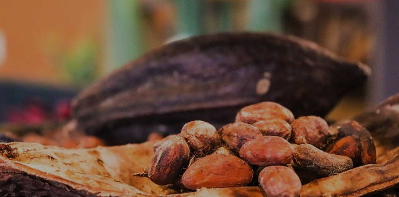 doxbury group, importers of trinidad and tobago trinitario cocoa, from cocoa bean to chocolate bar, process of making chocolate from cocoa beans, cocoa bean chocolate, making chocolate from cocoa beans,