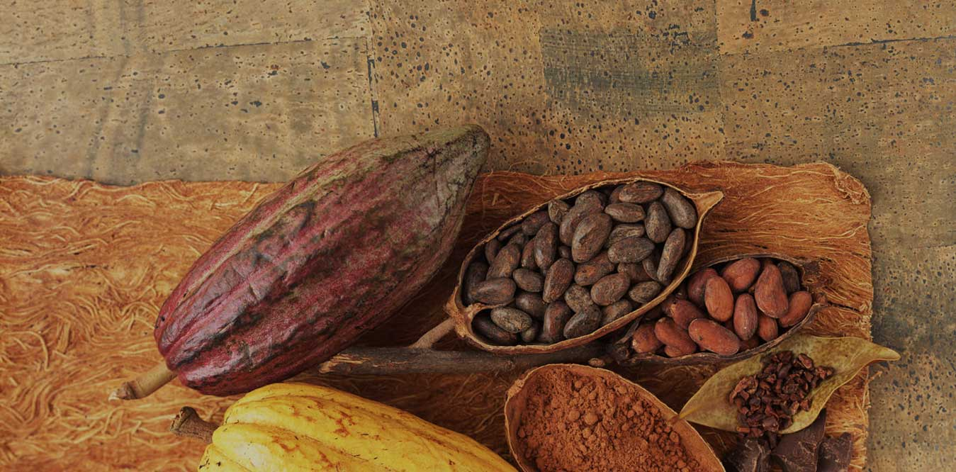 cocoa, cocoa powder, cocoa products, cacao powder, cocoa bean, raw cacao beans, cocoa bean plant, the chocolate tree, growing cocoa beans, best cocoa in the world, coffee beans and cocoa beans, cocoa beans on trees, cocoa beans on trees, best cocoa beans, fresh cacao beans